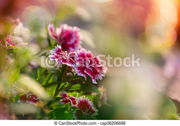 Flores - csp36206698