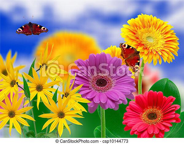 Flores Gerber - csp10144773