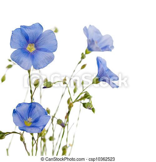 Hermosas flores de lino - csp10362523