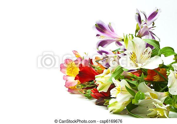 Flores - csp6169676