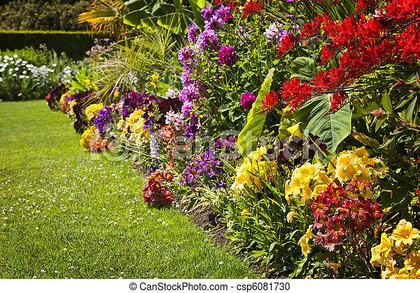 Flores de jardín coloridas - csp6081730