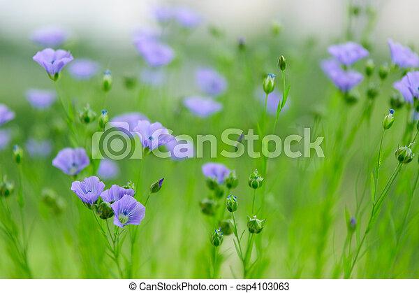 Flores de lino - csp4103063