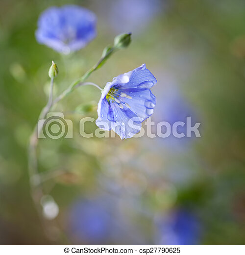 Flores de lino - csp27790625