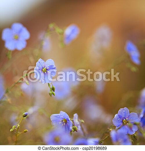 Flores de lino - csp20198689