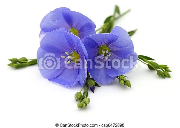 Flores de lino - csp6472898
