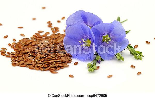 Semillas y flores de lino - csp6472905