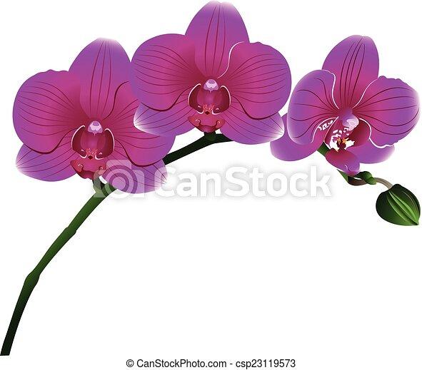 Orquídeas flores - csp23119573