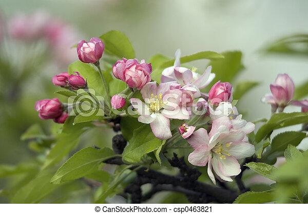 Flores - csp0463821