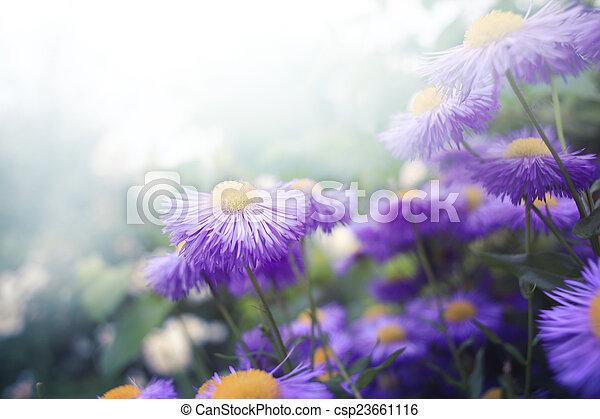 Flores - csp23661116