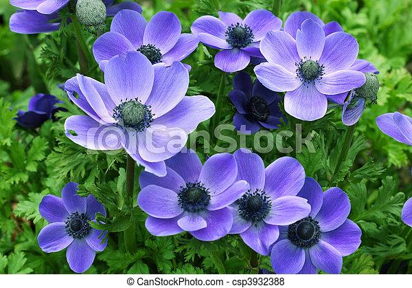 Flores - csp3932388