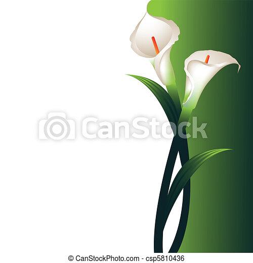 En el fondo con callas blancas - csp5810436