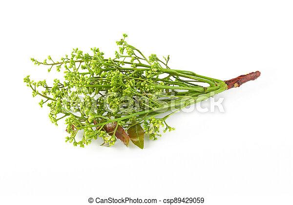 fondo., margosa, nim, blanco, neem, aislado, árbol, siamés - csp89429059
