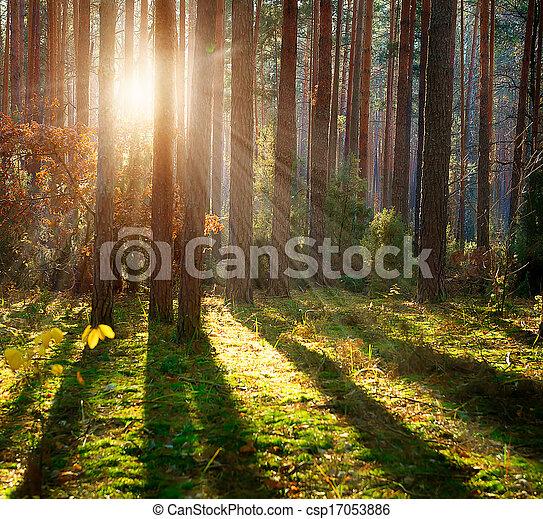 Viejo bosque. Bosques de otoño - csp17053886