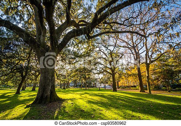 forsyth, español, parque, musgo, sabana, árboles, georgia - csp93580962