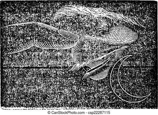 Fosphene, grabado antiguo. - csp22287115