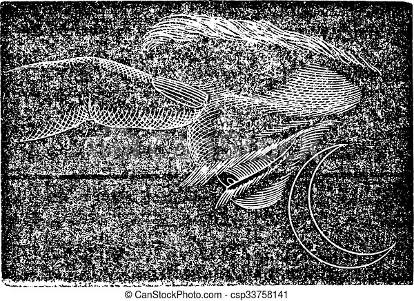 Fosphene, grabado antiguo. - csp33758141