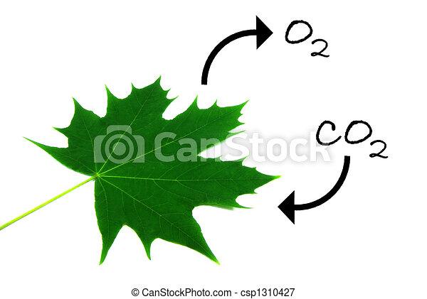 Fotosíntesis 1 - csp1310427