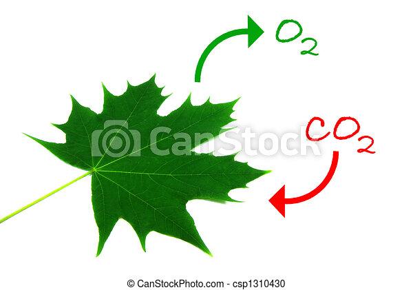 Fotosíntesis 2 - csp1310430