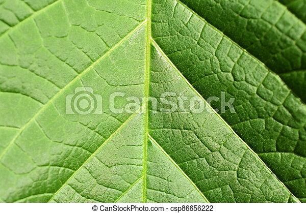 fotosíntesis - csp86656222