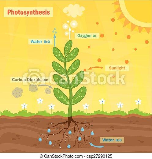 Fotosíntesis - csp27290125