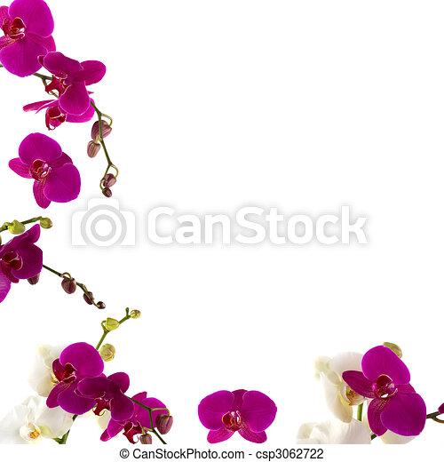 Frontera orquídea - csp3062722