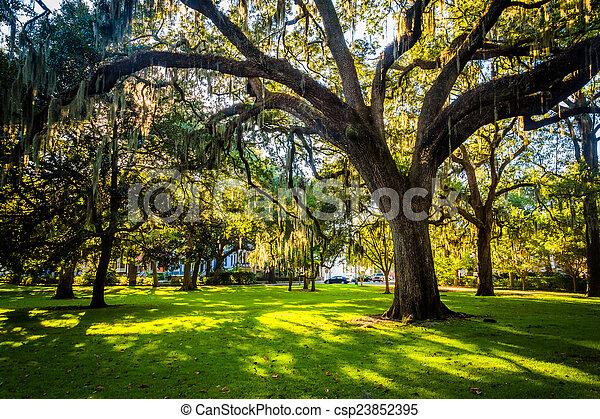 Grandes robles y musgo español en forsyth Park, Savannah, Geor - csp23852395