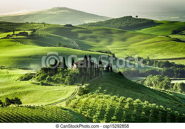 Granja de olivas y viñedos - csp15292858