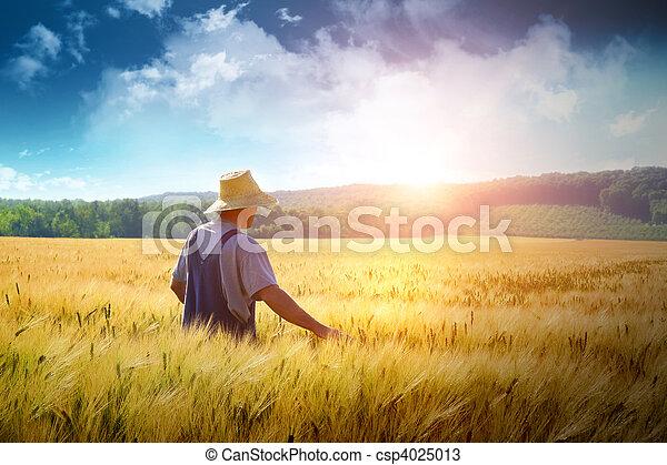 Granjero caminando por un campo de trigo - csp4025013