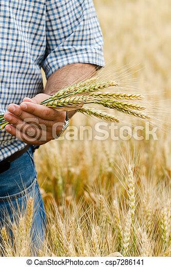 Granjero con trigo en las manos. - csp7286141