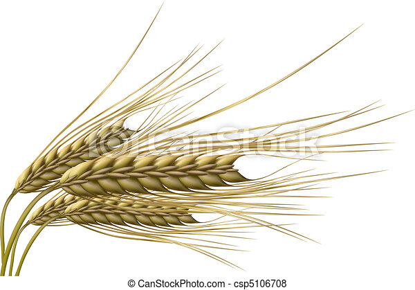 Grano de trigo - csp5106708