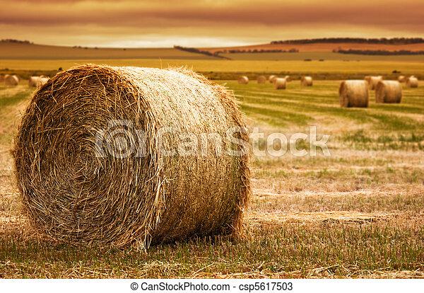 Hay bale Farm - csp5617503