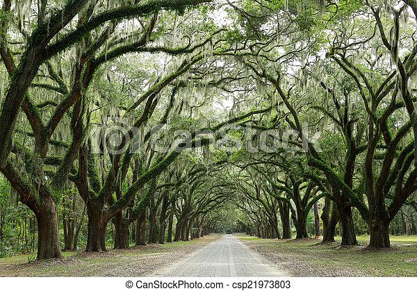 Hay dos robles cubiertos de musgo. Forsyth Park, Savannah, Geo - csp21973803