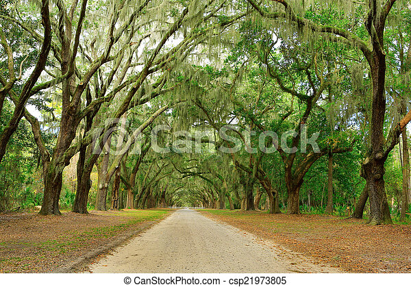 Hay dos robles cubiertos de musgo. Forsyth Park, Savannah, Geo - csp21973805