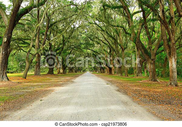 Hay dos robles cubiertos de musgo. Forsyth Park, Savannah, Geo - csp21973806