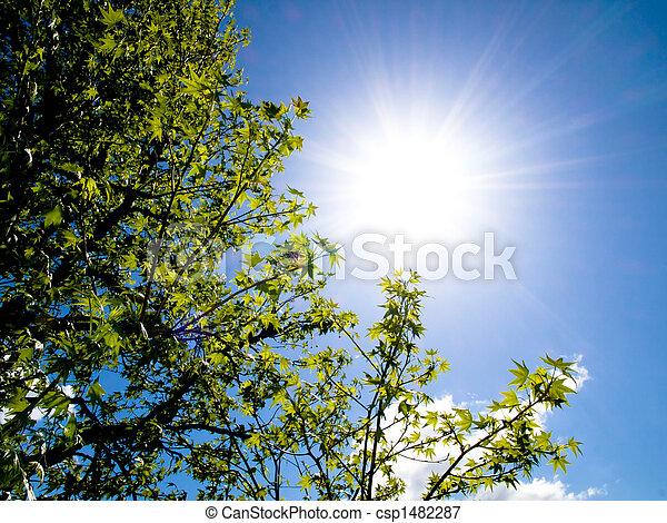 Hermoso árbol y sol primaveral - csp1482287