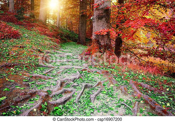 Hermoso paisaje otoñal - csp16907200