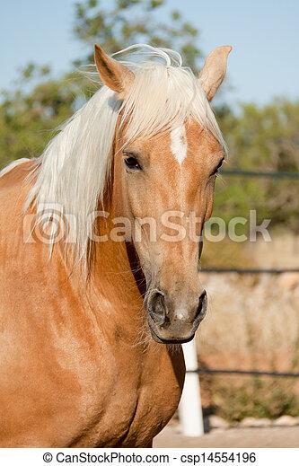 Hermoso caballo - csp14554196