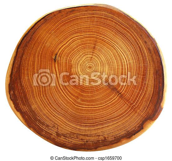 Hermoso corte de árbol - csp1659700