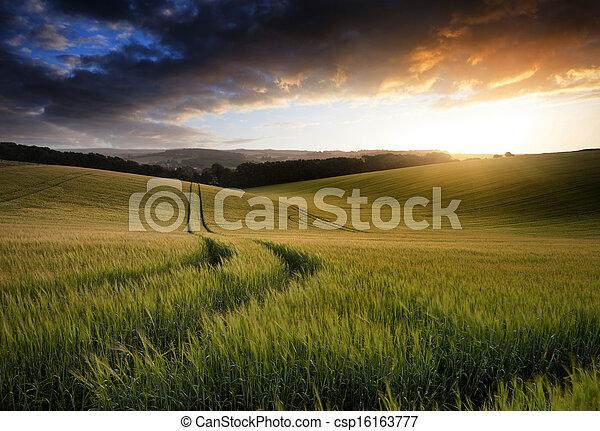 Hermoso paisaje de verano del campo de cultivo de trigo durante el atardecer - csp16163777