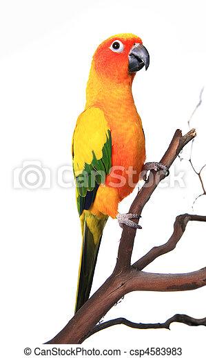 Un hermoso pájaro soleado en una rama - csp4583983