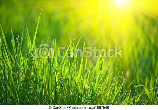 Hierba primavera - csp1667546