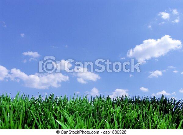 Hierba verde y cielo azul - csp1880328