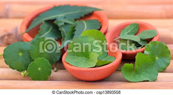 Hierbas medicinales - csp13893558
