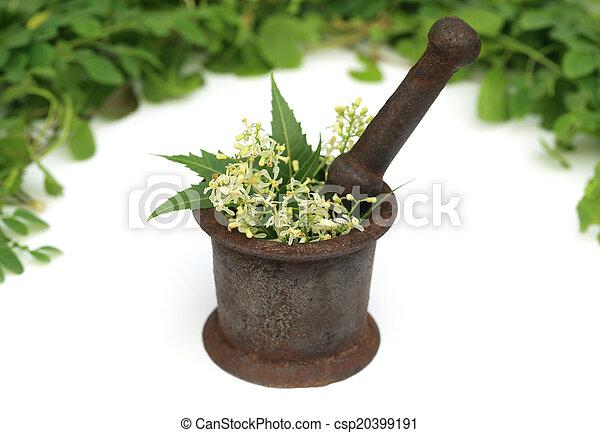Hierbas medicinales en un mortero vintage - csp20399191