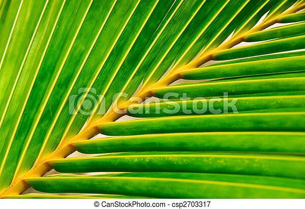 Hoja de palma viva - csp2703317