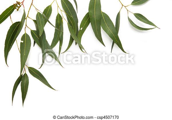 La frontera de las hojas de goma - csp4507170