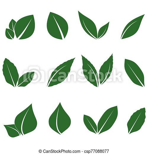 hoja, imagen, vector, verde - csp77088077