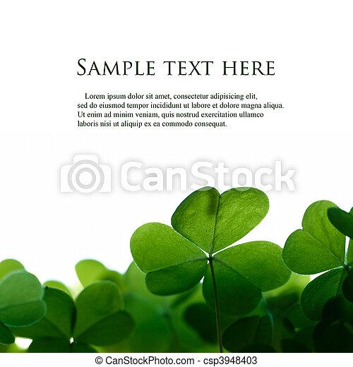 Hojas verdes de trébol bordean con espacio para el texto. - csp3948403