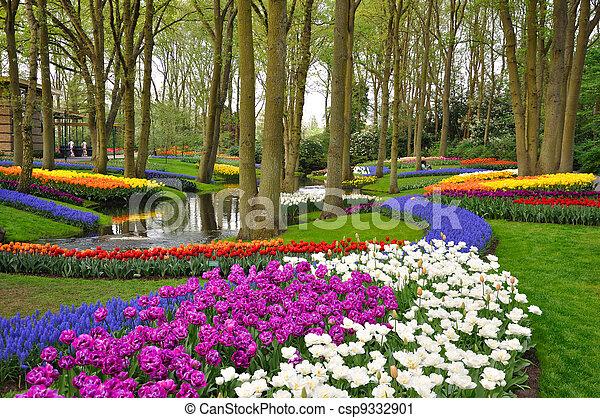Tulipanes coloridos en el parque Keukenhof en Holanda - csp9332901