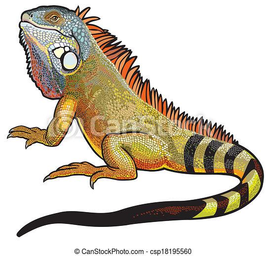 Hombre de iguana verde - csp18195560